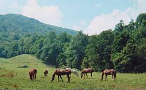bpd.horsesgraz